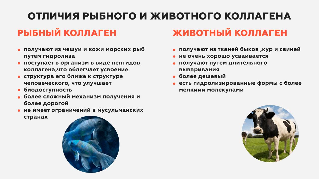 Отличия рыбного и животного коллагена