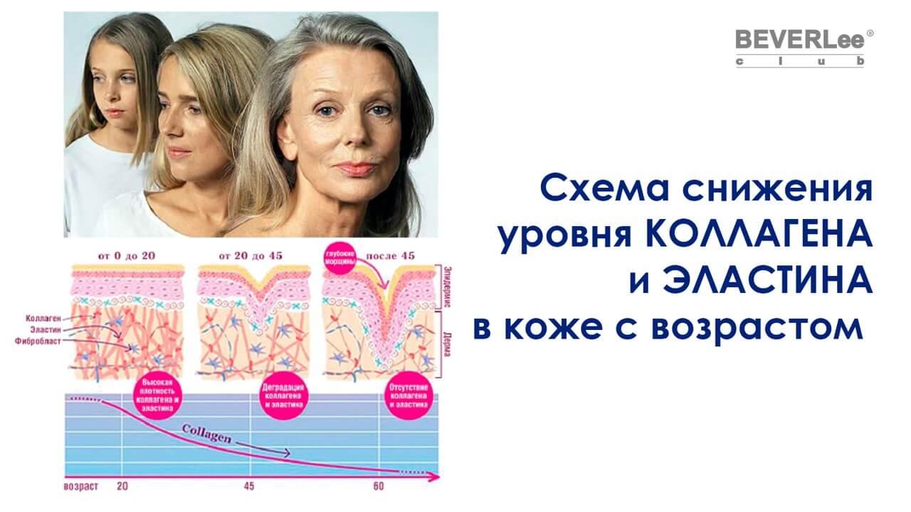 Коллаген и эластин снижения в коже с возрастом